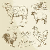 Cut of meat - lamb, chicken — Stock Vector