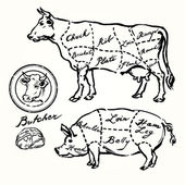 Pork and beef cuts - hand drawn set — Stock Vector