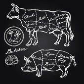 Pork and beef cuts - hand drawn set — Stockvector