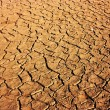 Stock Photo: Parched Earth