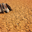 Piece of dry wood on the parched earth - Stock Photo
