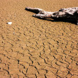 Piece of dry wood on the parched earth — Stock Photo
