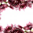 Frame with orchids — Stock Photo #16511427