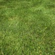 Green grass — Foto Stock #16513443