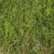 green gras — Stockfoto