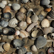 Texture of shell - Stock Photo