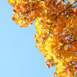Autumn leaves under a sunny blue sky — Foto de Stock