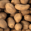 Raw potatoes — Stock Photo #16515505