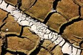 Lane on parched earth — Stock Photo