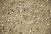 Avec des coquilles de sable — Photo