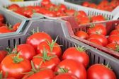 Punnets of cherry tomatoes for sale at a market — Stock Photo