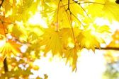 Autumn leaves under a sunny — Stock Photo