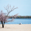 April on the Dnieper River — Stock Photo
