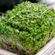 Stock Photo: Broccoli sprouts in bamboo plate, pumpkin on background
