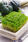 Broccoli sprouts in the bamboo plate, pumpkin on a background — Stock Photo