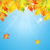 Autumn maple leaves on background blue sky — Stock Vector