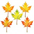 Set of autumn maple leaves isolated on white background — Stock Vector