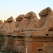 Sphinxes — Stock Photo