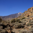 Stock Photo: The teide