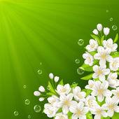 桜の開花枝 — ストックベクタ