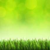 Grass on the green background — Stock Photo
