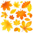 Stock Vector: Set autumn leaves