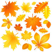 Set autumn leaves — Stock Vector