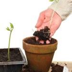 thumbnail of Potting plants