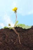 Dandelion sky — Stock Photo