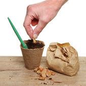 Hand planting — Stock Photo