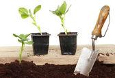 Vegetable seedlings — Stock Photo