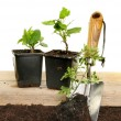 Plants and trowel - Foto Stock