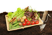 Basket of fresh garden produce — Stock Photo