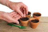 Pair of hands planting seeds — Foto de Stock