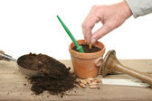 Planting seeds — Stock Photo