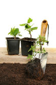 Plants and trowel — Stock Photo