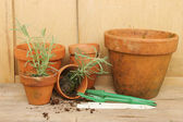 Potting plants — Stock Photo