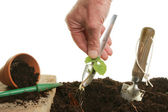 Transplanting a seedling — Stock Photo