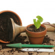 Potting a seedling — Stock Photo