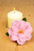 Candle and camellia — Stock Photo