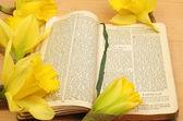 Modlitební kniha a narcisy — Stock fotografie
