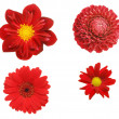Four red flowers — Stock Photo #16797191