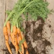 Royalty-Free Stock Photo: Freshly picked carrots