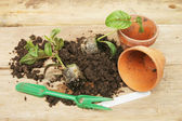 Potting on plants — Stock Photo