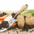 Freshly dug potatoes and carrots - Stock Photo