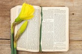 Prayer book and daffodil — Stockfoto
