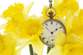 Watch and daffodils — Stock Photo