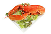 Cooked lobster on a plate of salad — Stock Photo