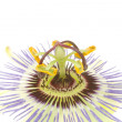Closeup of passion flower - Stock Photo