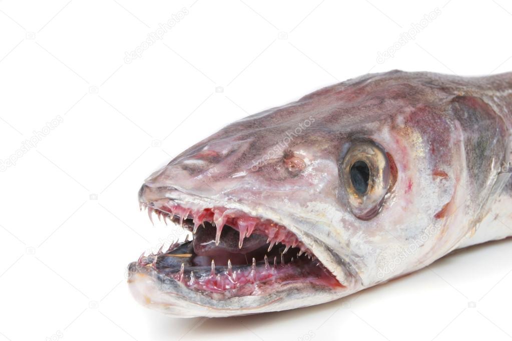 Рыба фото картинки